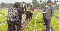 সমলয় পদ্ধতিতে চাষাবাদ: স্বল্প খরচে অধিক ফলন