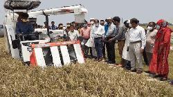 নেত্রকোনার হাওরাঞ্চলে ধান দ্রুতগতিতে কাটুন: জেলা প্রশাসক