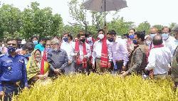 জনসংখ্যা বাড়লেও খাদ্য নিরাপত্তা চ্যালেঞ্জ মোকাবিলা সম্ভব: কৃষিমন্ত্রী