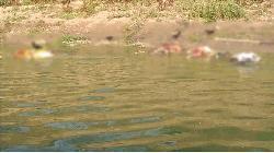 ভারতের বিভিন্ন নদীতে ভাসছে অসংখ্য লাশ